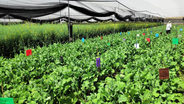 """<span class=""""entry-title-primary"""">זרקור על פלנטארק: האם זו החברה שתייצר מהפכה בעולם החקלאות?</span> <span class=""""entry-subtitle"""">פלנטארק ביו הונפקה בתחילת השנה ומפתחת שישה מוצרים בתחום של איתור גנים לתעשיית החקלאות שמובילים לשיפור תכונות בצמחים (כגון עמידות למזיקים) ושיפור היבול</span>"""